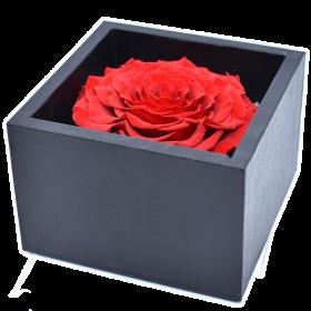 Coffret Rose Rouge XXL Unique