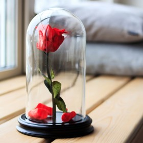 Dôme Rose Rouge 16 cm